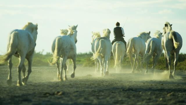 france camargue animal horses cowboy rider vegetation marshland - cowboy stock-videos und b-roll-filmmaterial