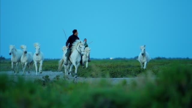 france camargue animal horses wildlife stallion gelding travel - stallion stock videos & royalty-free footage