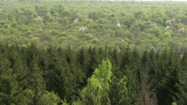 vidéos et rushes de france, metz lorraine: forest with fir trees - forêt