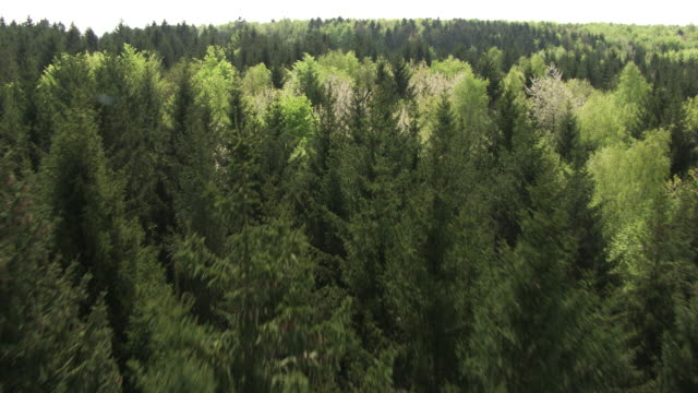 france, metz lorraine: forest with fir trees - lorraine stock videos & royalty-free footage
