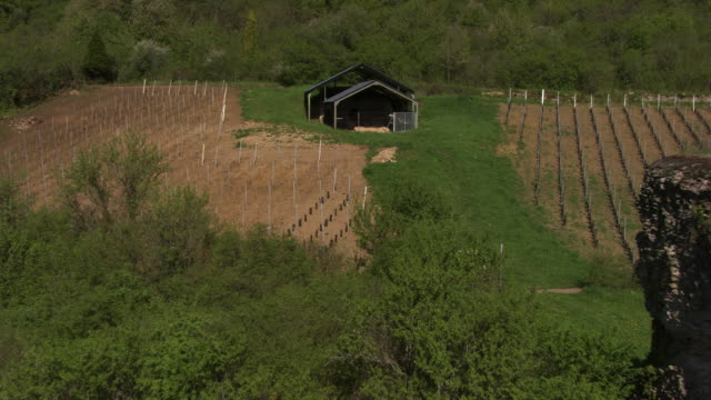 france, metz lorraine: tree nursery - metz stock videos and b-roll footage