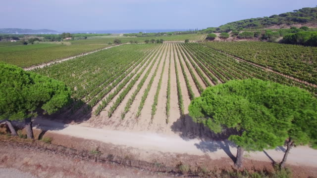 france, var, aerial view of vineyard at ramatuelle - var stock videos & royalty-free footage