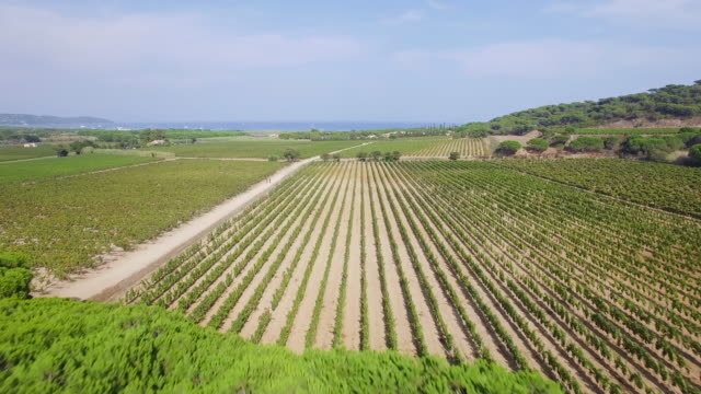 vidéos et rushes de france, var, aerial view of vineyard at ramatuelle - var