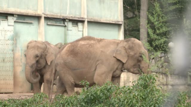 Frances Council of State has granted a reprieve for two zoo elephants who had been ordered put down because of their suspected infection with...