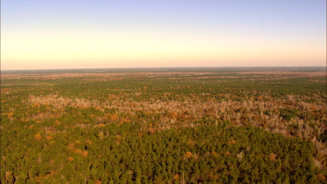 Francis Marion national forest - Aerial View - South Carolina,  Charleston County,  United States