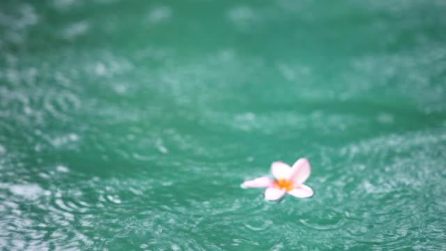 Frangipane floating on turqoise water