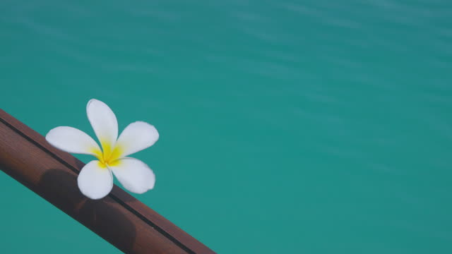 cu, frangipani flower (plumeria) on wooden railing against turquoise water, aitutaki lagoon, aitutaki, cook islands - aitutaki lagoon stock videos & royalty-free footage