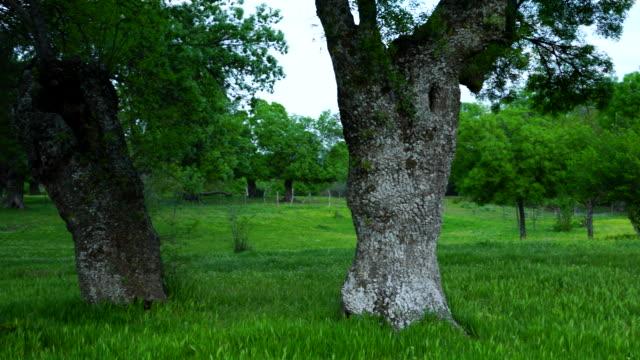 fraxinus excelsior — known as the ash, or european ash or common ash, herrería forest, san lorenzo de el escorial, madrid, spain, europe - ash tree stock videos & royalty-free footage