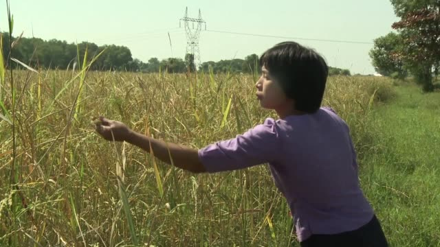 free app on farmer san san hla's smartphone is her new weapon in the war against the dreaded stem borer moth that blighted her rice paddy in southern... - last stock videos & royalty-free footage