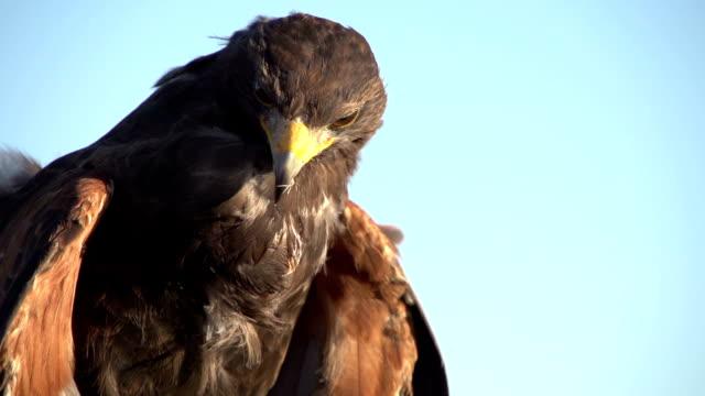 Cortesía como un águila