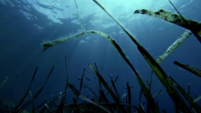 フリーダイバーハンティング魚を覗き込む - 無呼吸点の映像素材/bロール