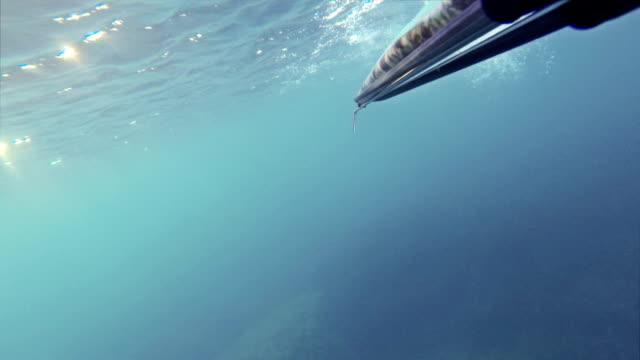 フリーダイバー spearfishing ゴンモ視点 - 無呼吸点の映像素材/bロール