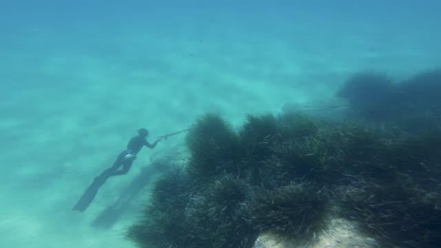 青い海での無料ダイバースピアフィッシング:地中海での冒険 - 水中カメラ点の映像素材/bロール