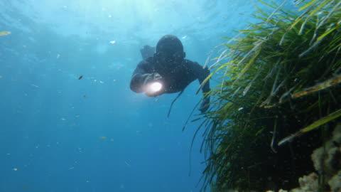 stockvideo's en b-roll-footage met gratis duiker speervissen in blauwe zee: avonturen in de middellandse zee - sea grass plant