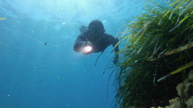 free diver spearfishing in blue sea: adventures in the mediterranean - sea grass plant video stock e b–roll