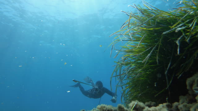 free diver spearfishing in blue sea: shooting harpoon with speargun - sea grass plant video stock e b–roll