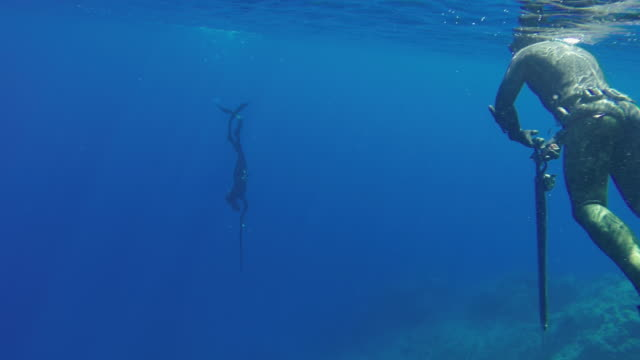 free diver spearfishing in blue sea - free diving stock videos & royalty-free footage