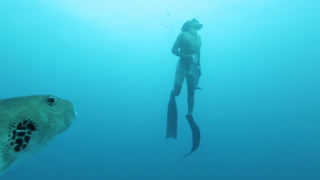 a free diver spearfishing in the ocean - arpone video stock e b–roll