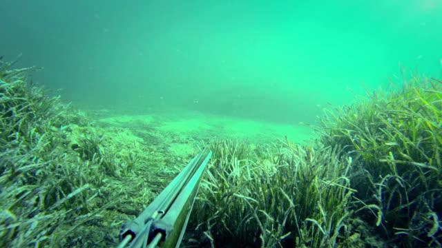 free diver spearfishing, shooting to goatfish - goatfish stock videos & royalty-free footage