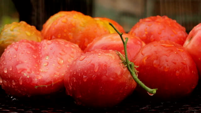 free range tomatoes - organic stock videos & royalty-free footage