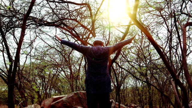 vídeos y material grabado en eventos de stock de concepto de libertad en el bosque, criado a mano y amanecer - alzar la mano