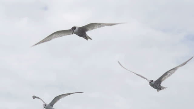 Freedom Fly : HD Slow motion