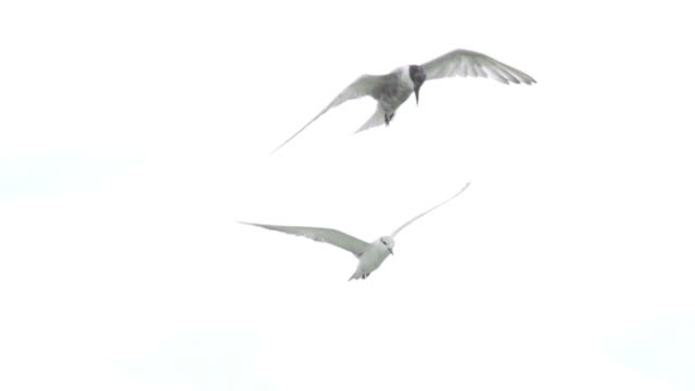 freedom : hd slom motion - seagull stock videos and b-roll footage