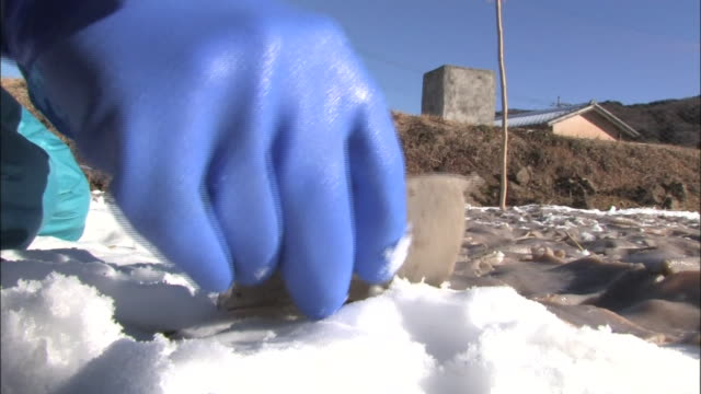 Freeze dried konjac cake production Low angle close up shot of farmers' hands placing konjac cakes on the snow covered field