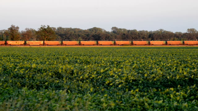 freight train and soy bean fielde - soya bean stock videos & royalty-free footage