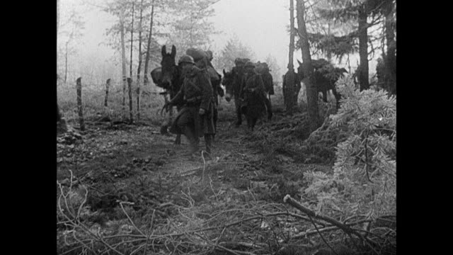 montage french army soldiers hauling mail bags, and leading mules carrying mail to the maginot line / strasbourg, france - mule stock videos & royalty-free footage