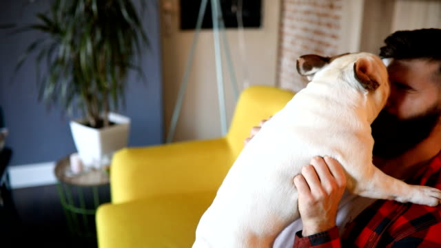 french bulldog kissing his owner - barba peluria del viso video stock e b–roll