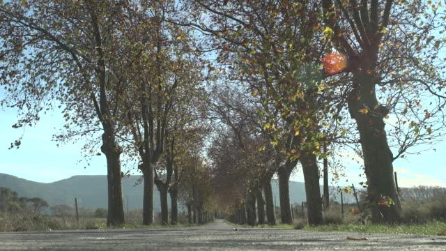 vidéos et rushes de french country road - route déserte