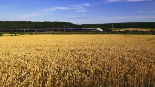 french high speed tgv train drives past wheat fields, meuse department, lorraine - tgv点の映像素材/bロール