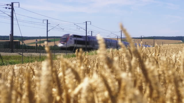 french high speed tgv train passes alongside windy wheat field, meuse department, lorraine - tgv stock videos & royalty-free footage