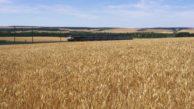 vidéos et rushes de french high speed tgv train passes breezy wheat field, meuse department, lorraine - scène non urbaine