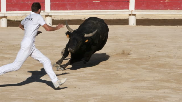 French-style bloodless bullfighting called course camarguaise in Saintes-Maries de la Mer, France