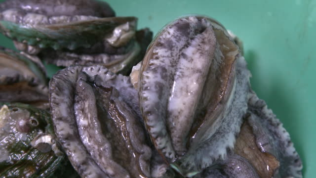 A fresh abalone (Korean food)