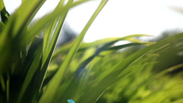 dolly fresh and green spring grass - blade of grass stock videos and b-roll footage