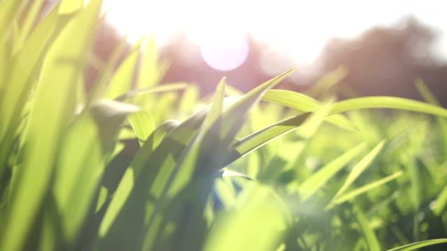 新鮮なドリーし、緑の春の草 - 草地点の映像素材/bロール