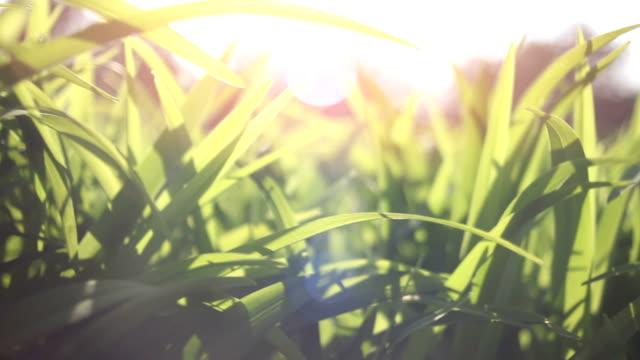 vídeos y material grabado en eventos de stock de dolly-fresco y verde hierba de primavera - plano de plataforma rodante