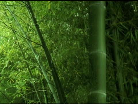 Fresh Asian Bamboo