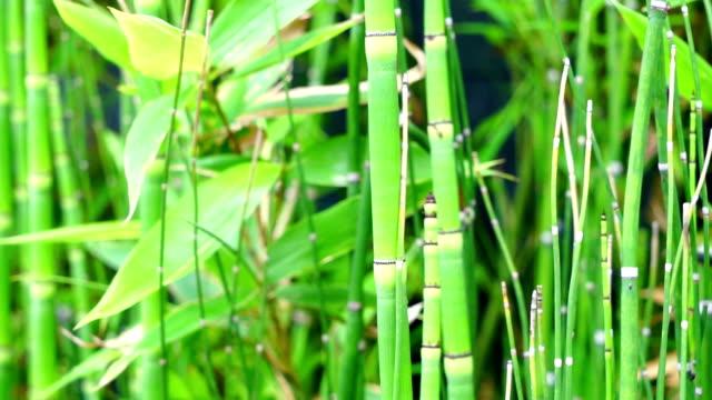 新鮮な竹の森 - 竹点の映像素材/bロール
