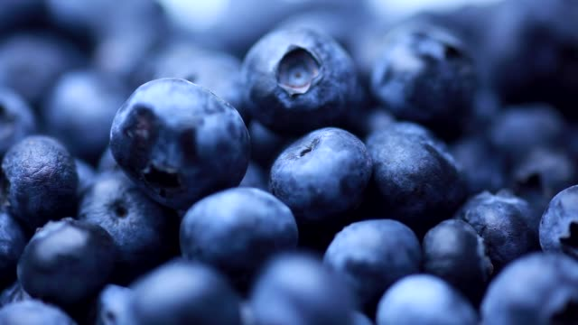 vídeos de stock e filmes b-roll de fresh blueberries (full-frame) - maduro