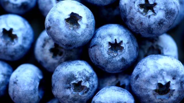 fresh blueberry - blueberry stock videos & royalty-free footage