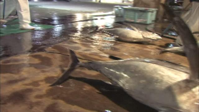 fresh caught tuna - fünf gegenstände stock-videos und b-roll-filmmaterial