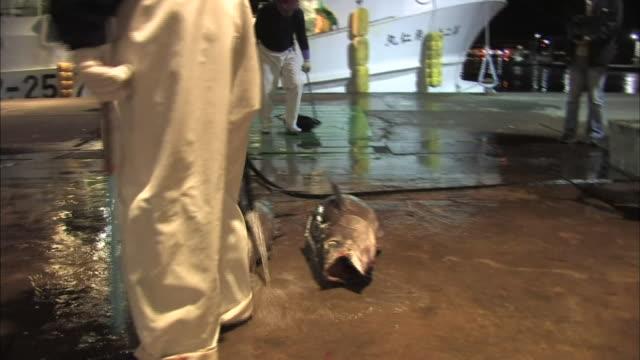fresh caught tuna - tuna seafood stock videos and b-roll footage