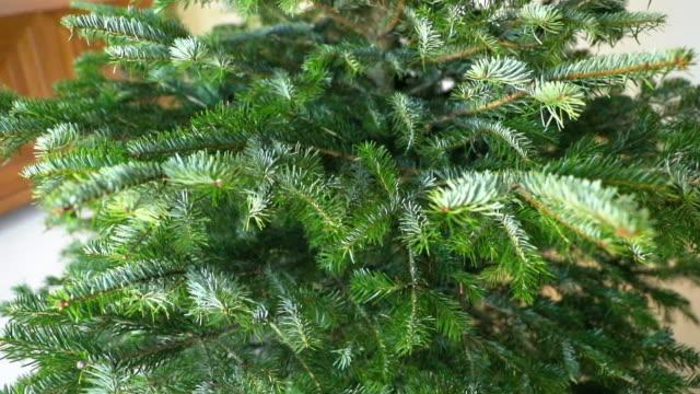 リビング ルームで新鮮なクリスマス - 針状葉点の映像素材/bロール