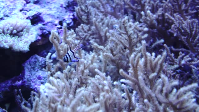 fresh coral - tier in gefangenschaft stock-videos und b-roll-filmmaterial