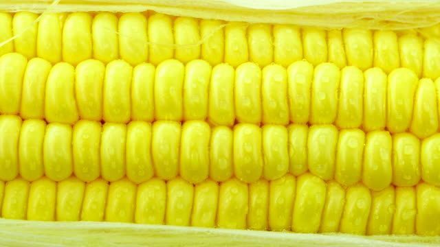 Fresh corn. close up.Front view. From right to left.