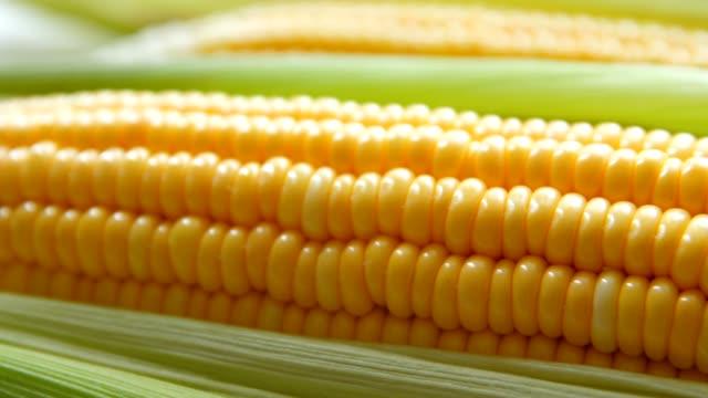 fresh corn - buccia video stock e b–roll